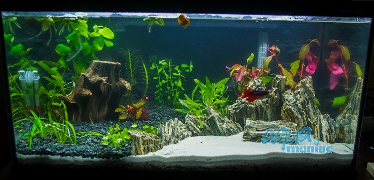 Aquarium rocks for your fish tank hard scape for Aquarium wood decoration